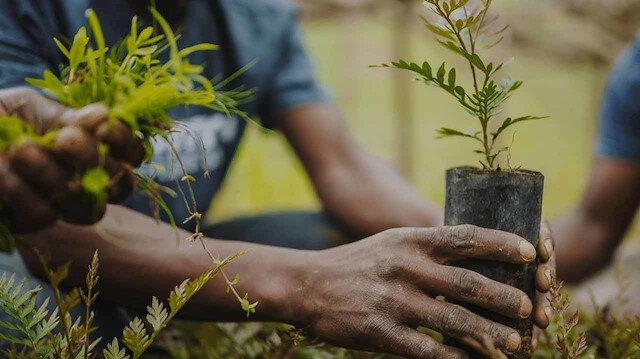Ormanlarının yarısı tahrip olan Nijerya'da 1 yılda 30 milyon ağaç dikilecek