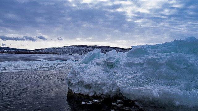 Sibirya'da Buzul Çağı'ndan kalma kuşun kalıntısı bulundu