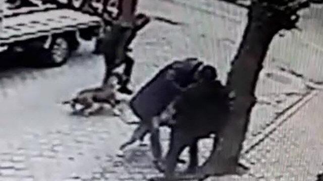 Ağaca bağlı Rus finosuna 2 pitbull saldırdı
