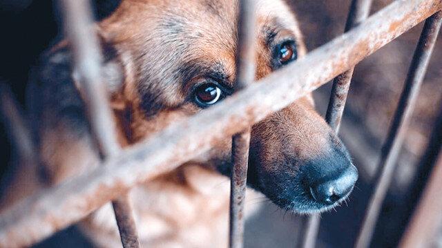 Hayvanlar artık 'mal' değil 'can'
