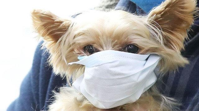 Evcil hayvanlardan insanlara koronavirüs bulaşır mı?
