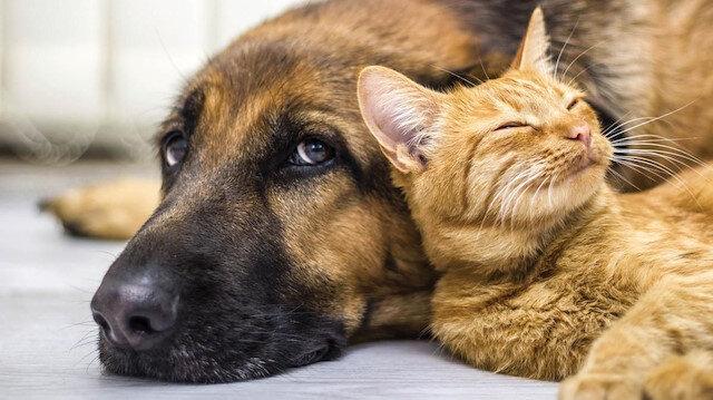 Hayvanlara sahip çıkalım: Evcil hayvanlardan koronavirüs bulaştığına dair bulgu yok