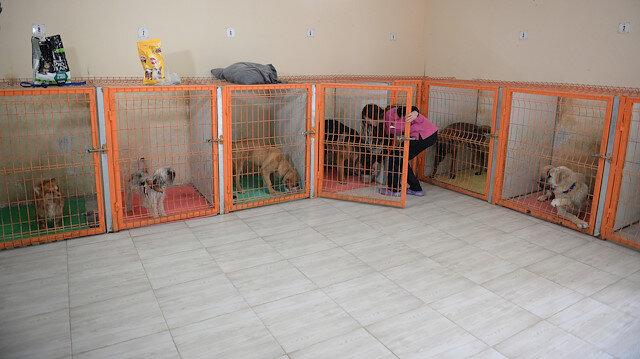 Koronavirüs endişesiyle evcil hayvan sahipleri otellere koştu: Boş yer bulmak imkansız