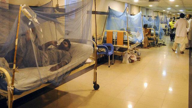 Endonezya'da dang hummasından bu yıl 254 kişi öldü