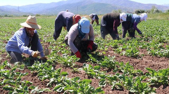 Dijital Tarım Pazarı ile çiftçilerin mağduriyeti giderilecek