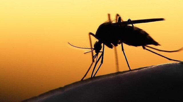 Bilim insanları sivrisinekleri sıtmadan koruyan 'mikrop' keşfetti