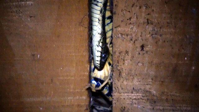Hakkari'de 6 kişilik aile evlerine giren yılanlar nedeniyle zor günler geçiriyorlar