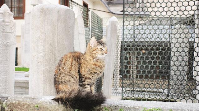 Kediler türbelerin ayrılmaz parçası