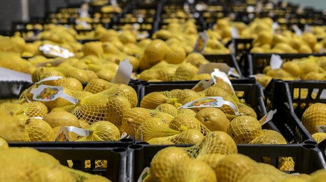 Limon üreticisine ihracat müjdesi