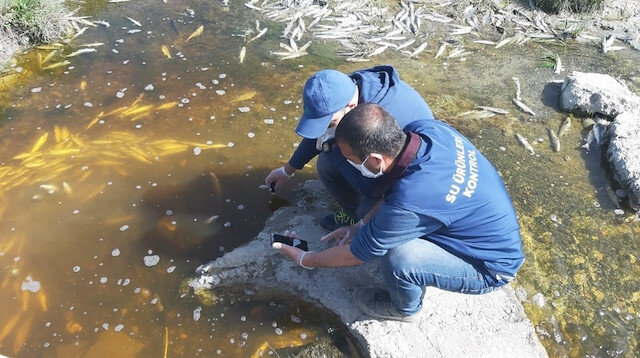 Van'daki balık ölümleri endişelendirdi