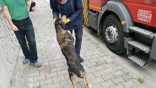 Uçuruma düşen köpek kendisini kurtaran itfaiye çalışanının peşini bırakmadı