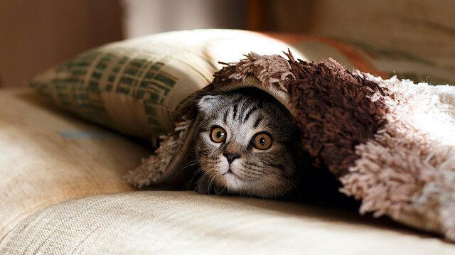 Post-Modern Mitoloji Sözlüğü: Kedi