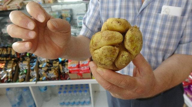 Yumruk değil patates: Müşterilerin ilgisine sunuldu