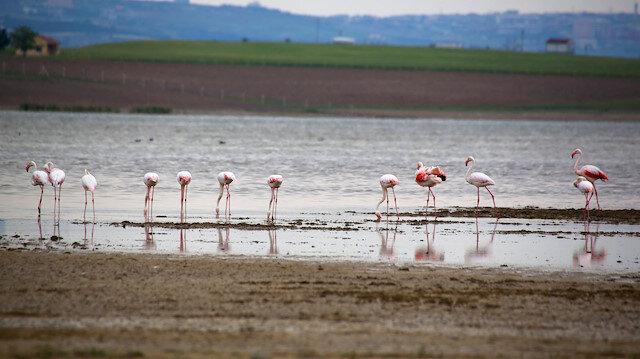 Flamingolardan Gölbaşı semalarında görsel şöleni