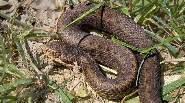 🐍Son günlerde yılanlar neden çok görülüyor?