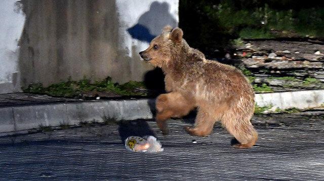 Kars'ta görüntülendi: Yaşananlar mahalleli ile apartman sakinlerini güldürdü