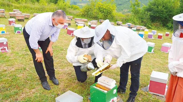 Sakarya ırkı arı bal: Sakarya'da aylık 3 bin 600 anaç arı üretiliyor