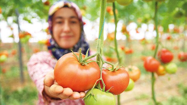 Genç Çiftçi Projesi ile hayatları değişti: Toprağın sultanları olacaklar