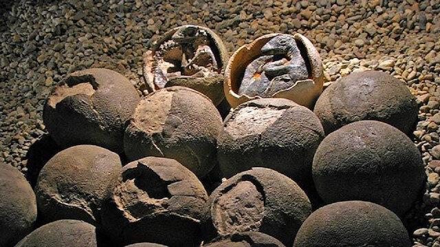 Dünyanın en küçük dinazor yumurtası fosili: Tamba'da ortaya çıktı