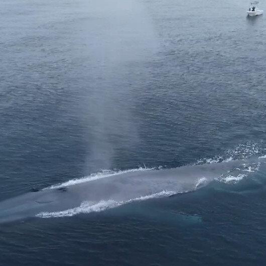 Pasifik Okyanusunda görülen dev mavi balina balıkçıları korkuttu