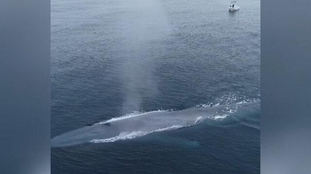 Pasifik Okyanusu'nda görülen dev mavi balina balıkçıları korkuttu