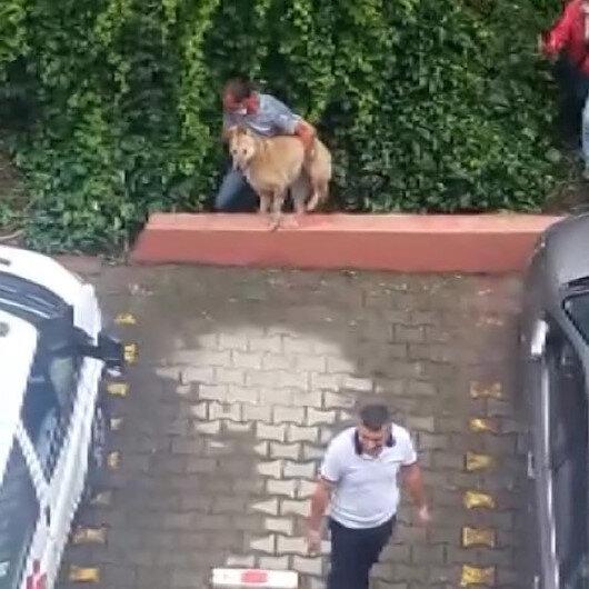 Kadıköyde hayvanseverlerden belediyeye büyük tepki