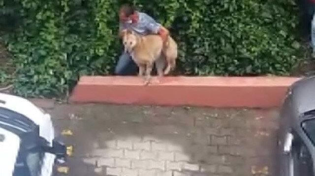 Kadıköy'de hayvanseverlerden belediyeye büyük tepki