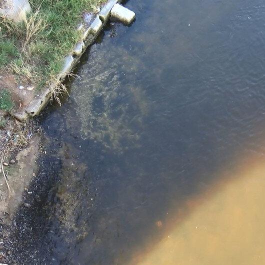 Küçükçekmece Gölünde vahim tablo: Binlerce balık kıyıya vurdu