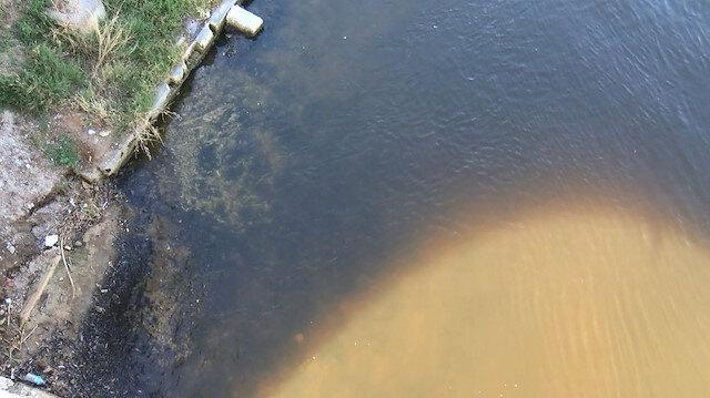 Küçükçekmece Gölü'nde vahim tablo: Binlerce balık kıyıya vurdu