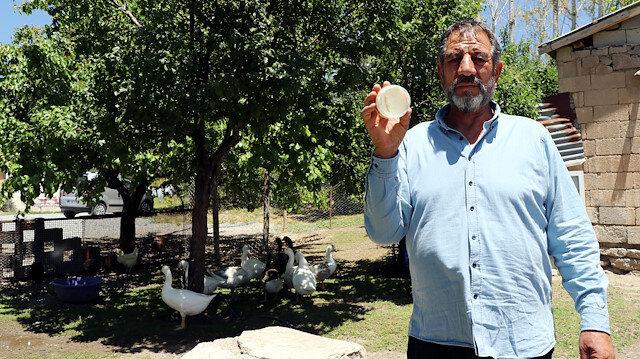 Van'da yetiştirilen kazlara yurt dışından talep: Aldıkları kazların hem etini yiyor hem yağını dizlerine sürüyor