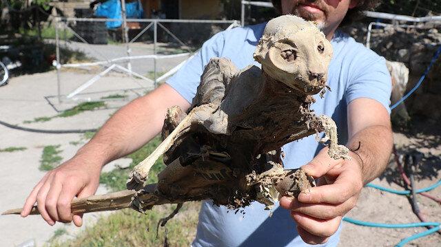 Kayseri'de evin bodrumunda odun ararken hayvan iskeleti buldu: Böyle bir şeyi ilk kez görüyorum