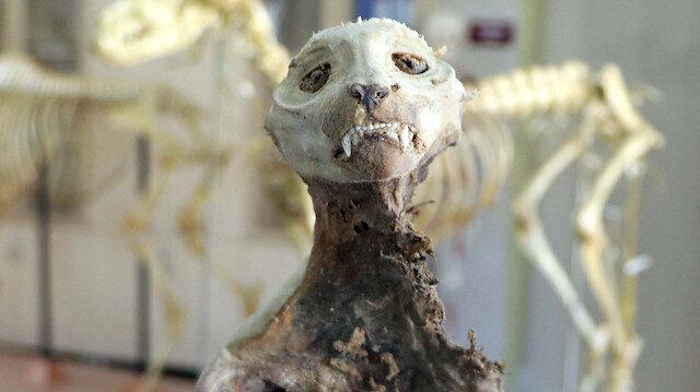 Kayseri'de evin bodrumunda bulunan hayvan iskeleti bakın neye ait çıktı