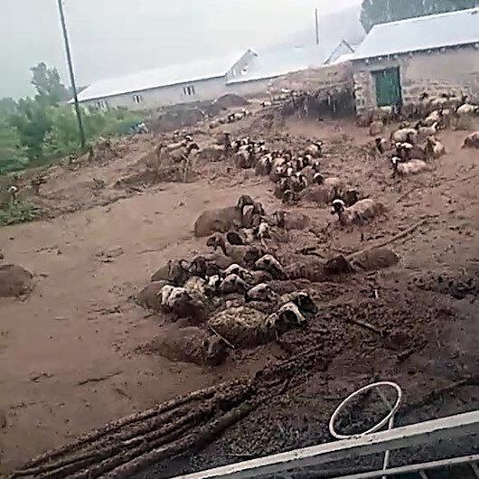 Ercişte sele kapılarak telef olan koyunlar kameraya yansıdı
