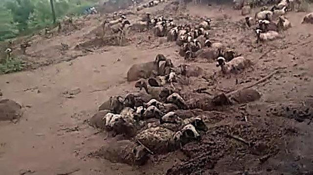 Erciş'te sele kapılarak telef olan koyunlar kameraya yansıdı