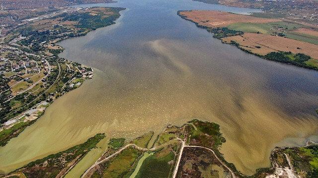 Eskiden kuş cenneti olan Küçükçekmece Gölü şimdi balık mezarı oldu: Bu kirliliğe ilk defa şahit oluyorum