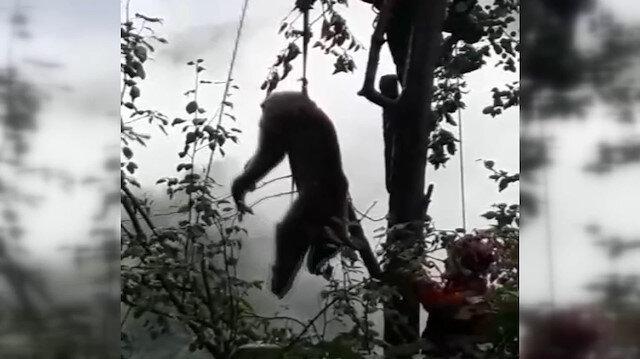 Rize'de bir ayı çıktığı ağaçta mahsur kaldı: Ayının imdadına AKUT ekipleri yetişti