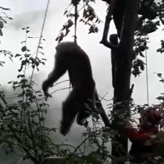 Rizede bir ayı çıktığı ağaçta mahsur kaldı: Ayının imdadına AKUT ekipleri yetişti