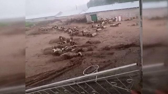 Van'da sel sularına kapılan 74 koyun telef oldu