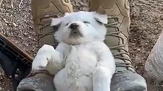Mehmetçik yavru kurt köpeğini ayağında sallayarak uyuttu, görüntüler izleyenleri duygulandırdı