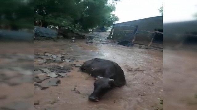 Malazgirt'te sel sularına kapılan 50 büyükbaş hayvan telef oldu