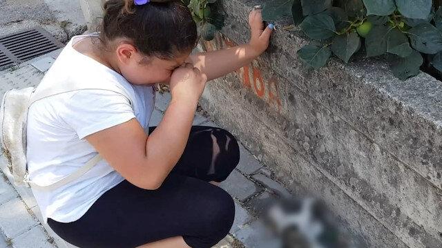 Yol kenarında can çekişen kediyi görünce gözyaşlarına boğuldu