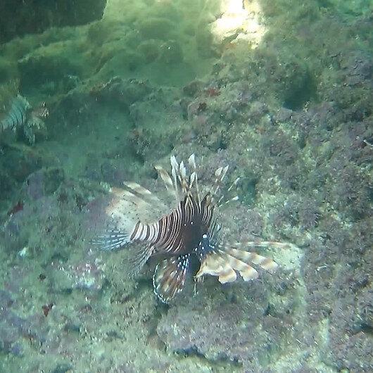 Antalyada hobi amaçlı görüntüleme yaparken dünyanın en zehirli balığını kaydetti