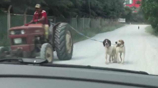 İki köpeği traktöre bağlayıp yolculuk yaptı: Onların bu duruma alışkın oluğunu söyledi