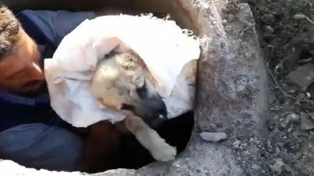 Yavru köpeği kurtarmak için kanalizasyon çukuruna girdi