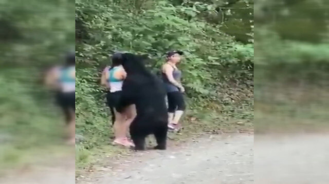 Görenler şaşkına döndü: Parkta karşılarına çıkan ayı ile selfie çektiler