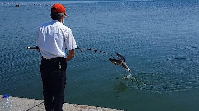 Oltaya balık değil martı takıldı