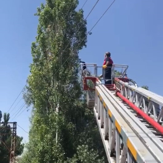 Ağaçta mahsur kalan kargayı itfaiye ekibi kurtardı