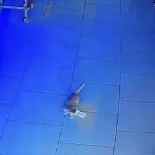 Hırsız kedi kamerada: Kasadan bir tomar para çalarken suçüstü yakalandı