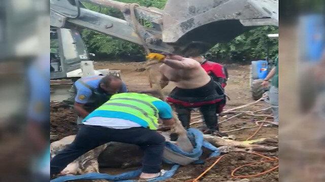 Mersin'de su kuyusuna düşen ineği itfaiye ekipleri böyle kurtardı