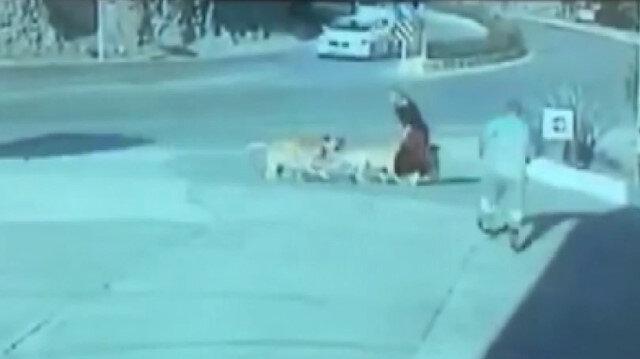 Sokak köpeklerinin saldırısına uğrayan kadını benzinlik çalışanı kurtardı